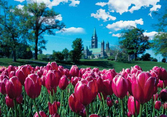 2014 marks the 62st Canadian Tulip Festival, celebrating the Dutch-Canadian connection.