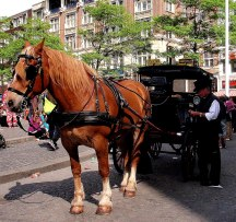 Play Cinderella + Prince Charming in a horse-drawn carriage.