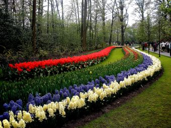 In 2015, Keukenhof will commemorate the 125th anniversary of Vincent Van Gogh's death.